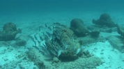 MUSA-Cancun-Underwater-Museum.mp4