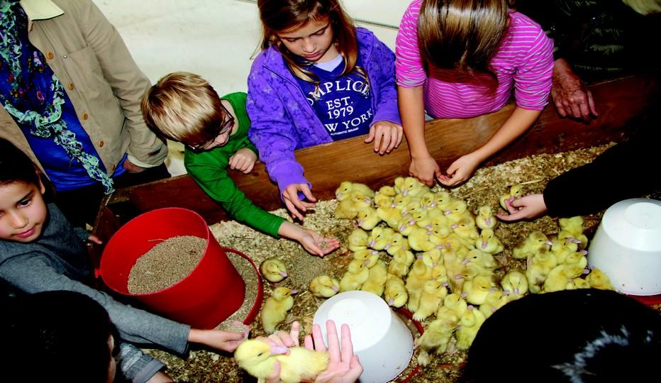Egalement lors de ce salon une ferme vivante. Ici des enfants heureux de toucher de près de nombreux poussins.© SILG