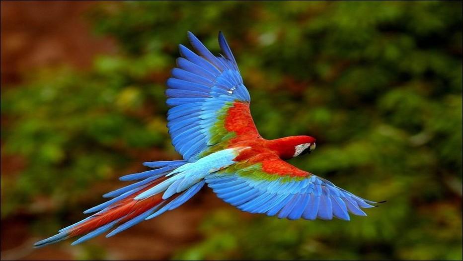 Les ruines de Copan au Honduras, le paradis des aras multicolores et des orchidées. © Lindigomag/Pixabay.com