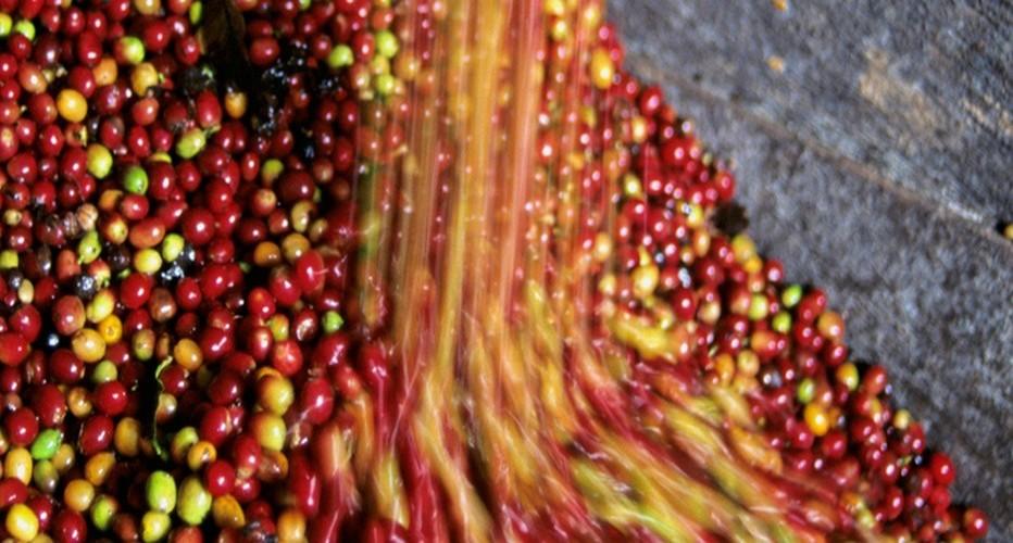 Cela fait maintenant 120 ans que Lavazza sélectionne les meilleurs grains, assemble les meilleures saveurs pour des recettes uniques. © Lavazza.fr