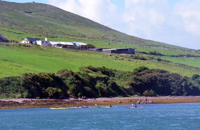 Niché entre l'océan Atlantique, Dingle s'est réfugié au fond d'un charmant port naturel© David Raynal