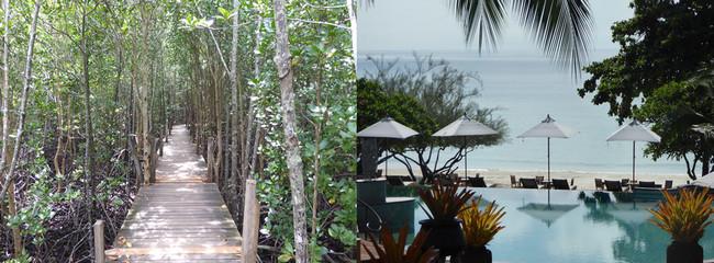 A Thung Prong Thong  la mangrove dorée avant d'arriver sur la plage de sable fin de  l'hôtel Paradee . © C.Gary