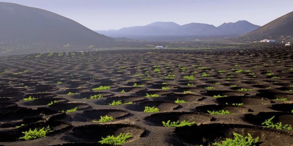 La Geria Culture de vignes dans les creux de la lave.(Copyright OTC)