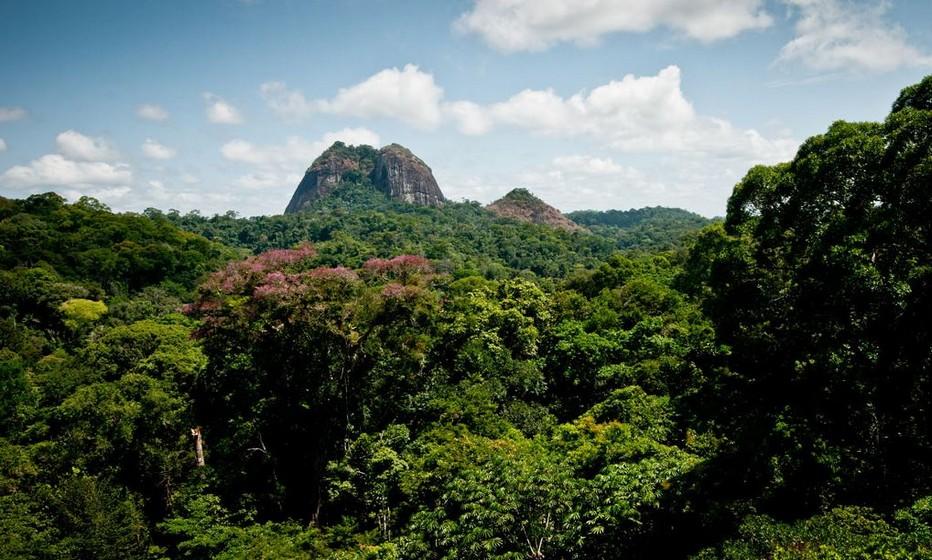 Un patrimoine extraordinaire, la biodiversité du Parc Amazonien de Guyane