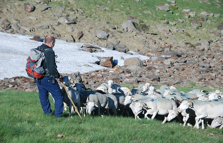 , Agneau des Pyrénées (en cours d'obtention d'IGP), @ C.R. de l'Agriculture de la Haute-Garonne