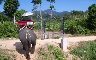 la Ferme des Eléphants sur l'île de Koh Chang (Crédit photo Kim Frossard)