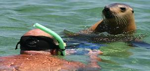 Nage avec les lions de mer