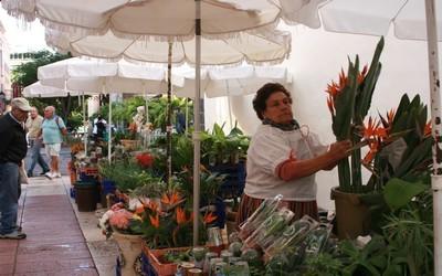 Marché aux fleurs de Puerto de la Cruz
