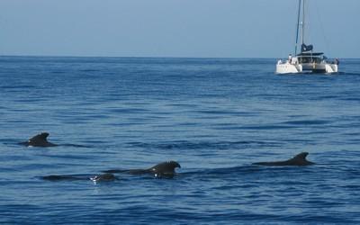 rencontre avec les dauphins et baleines entre Tenerife et l'ïle de la Gomera