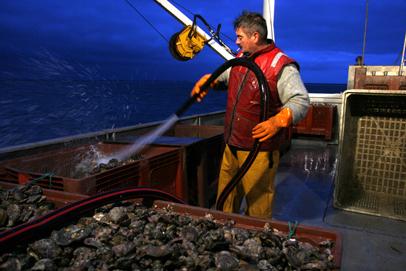 Ramassage des huîtres au petit matin dans la baie du Mont Saint-Michel sur un bateau à roues.