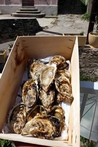 Les huîtres corses de l'étang de Diane
