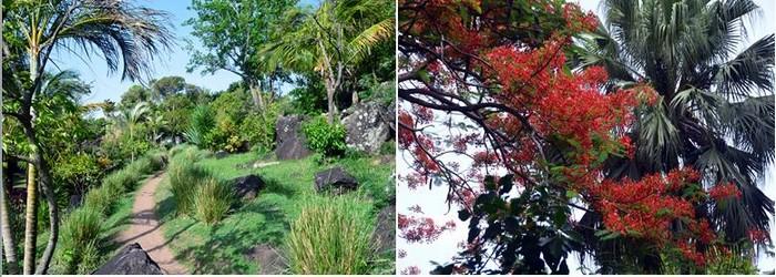 L'ile de Sainte-Lucie bénéficie d'une végétation exubérante et paradisiaque.@ David Raynal