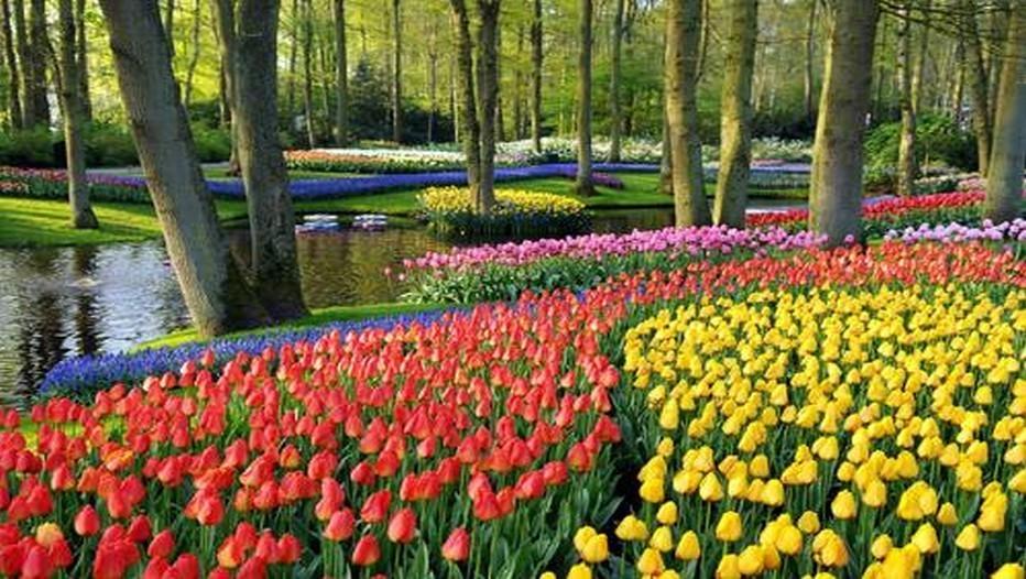 Jardins de Keukenhof  (Pays-Bas)