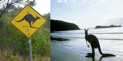 Arrivée à Kangoroo Island (Photo Catherine Gary)
