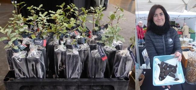 De gauche à droite : Trufforum. Vente de chênes truffiers.@ C.Gary  Sur le marché aux truffes de Vic. @ Catherine Gary