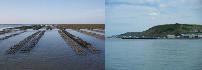 Parc à huîtres ,  vue de Port en Bessin.