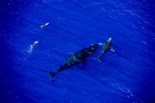 Réconciliation entre l'homme et l'animal - Retour de la faune marine dans les eaux cristallines de l'Océan Indien à La Réunion. @ IRT