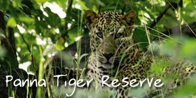 Inde : tourisme interdit dans les réserves de tigres