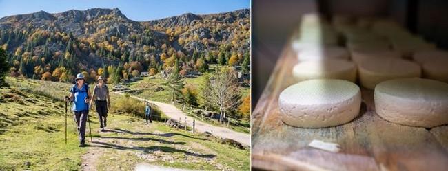 Jolies balades en automne sur les contreforts des Vosges et Le Munster, au Challenge des chefs. @ Office de Tourisme de la Vallée de Munster – Quentin Gachon