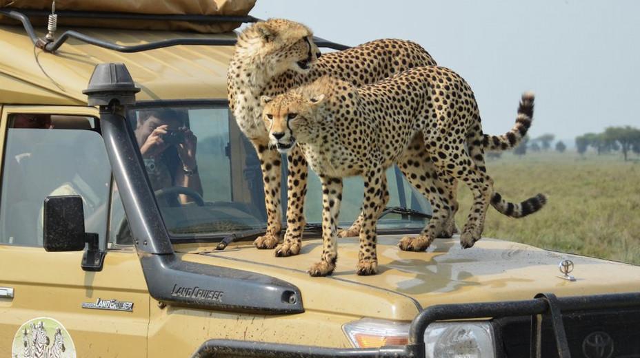 Safari dans un parc naturel de Tanzanie @ Tanganyka expéditions.