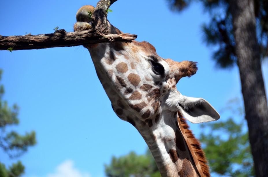 La vie sauvage dans les parcs animaliers en Tanzanie. @ David Raynal.