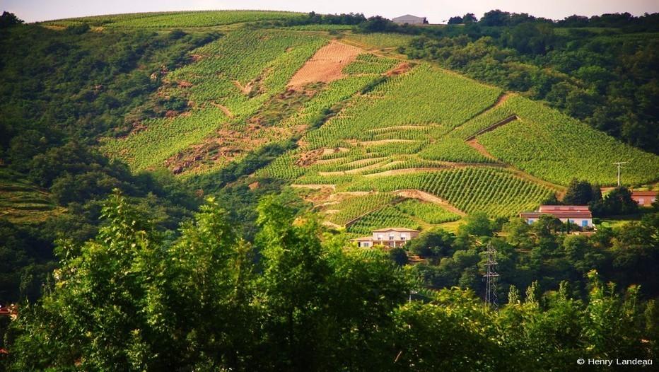 Vignobles à Ampuis (Vallée du Rhône)