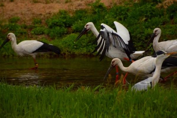 Le Parc Hyôgo de la cigogne orientale pour les voir  et profiter d'une visite au musée. @ TripAdvisor