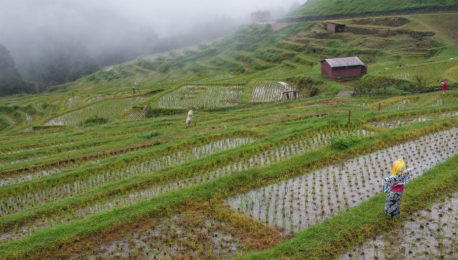 Aucune utilisation de  pesticides permettant ainsi un environnement sain pour les cigognes et la faune @ Pixabay/lindigomag