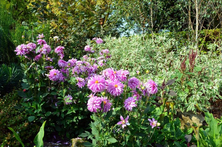 Dans les jardins de Giverny... @ David Raynal