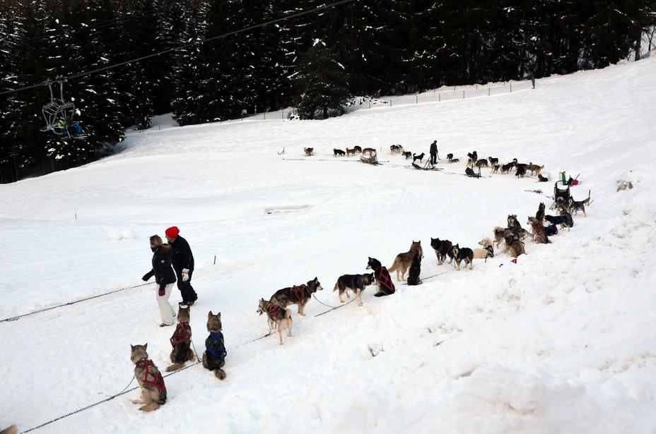 En dehors du ski alpin, créez-vous aux Carroz d'incroyables souvenirs au détour de nombreuses activités : fatbike électrique, luge sur rails, conduite d'attelage de chiens de traîneaux, luge en bande, parapente, patinoire, pisicne à l'Aquacîme © OT David Raynal