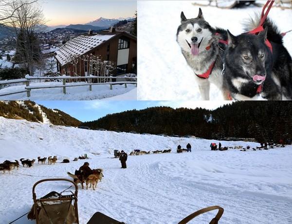 Au cœur du domaine du Grand Massif à la station des Carroz-d'Arâches en Haute-Savoie, Huskydalen propose de découvrir, hiver comme été, les balades avec des chiens de traineau. @David Raynal