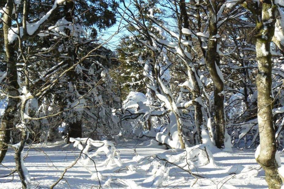 Sans le ski de piste, on peut découvrir la nature. @ André Degon