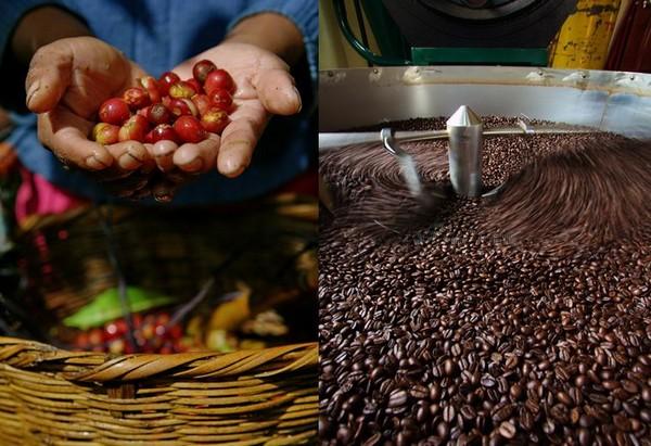 L'Amérique Centrale concentre des conditions géographiques idéales à la culture du café @ OT Amérique Centrale.
