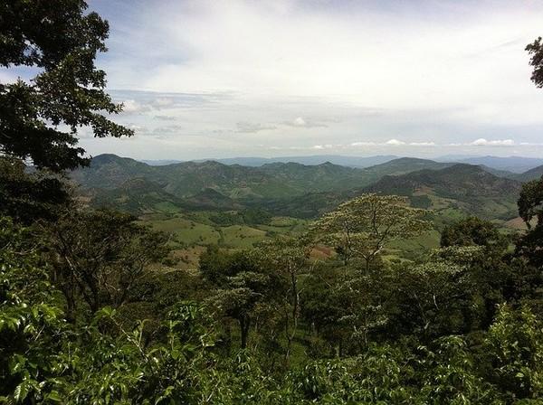Plantation de café au Honduras @ Pixabay.com