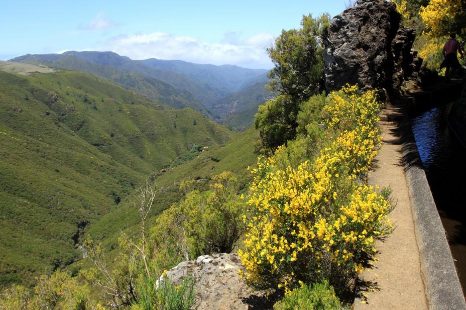 La forêt laurissilva (laurifère) date de l'ère tertiaire, et les dernières glaciations ont réduit sa superficie à la Macaronésie, c'est-à-dire à Madère, les Açores, les Canaries et le Cap Vert.  @ David Raynal