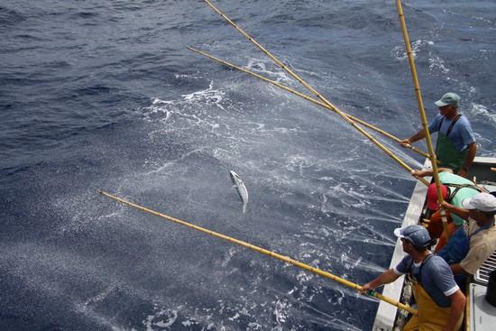 Pëcheurs à la canne, une pêche raisonnée et durable. @  Fish4Ever