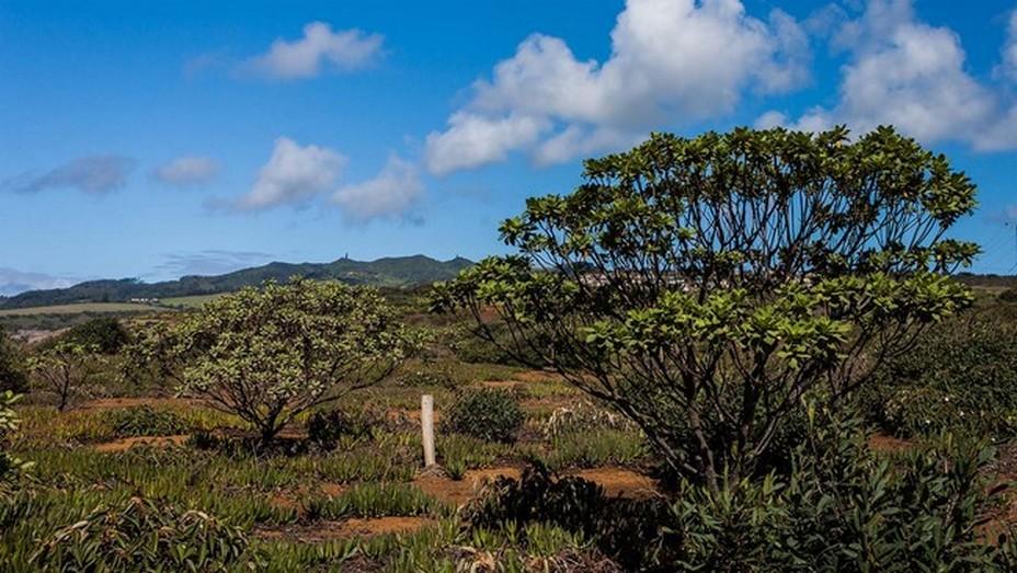 Ce rocher qui tombe à pic dans l'océan à 16° au sud de l'équateur dont les saisons sont pour nous inversées, bénéficie d'un climat méditerranéen tempéré. OT Ile de Saint-Hélène.