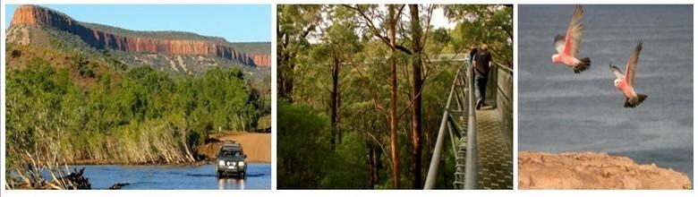 1/ Craig Haslam, dit Hassie, l'un des pionniers du tourisme d'Adélaide à Perth ©Patrick Cros2/ Marche sur la canopée d'eucalyptus géants ©Patrick Cros  3/ Cacatoès d'Australie en plein vol ©Patrick Cros