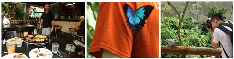 1/La terrasse du restaurant  Frogs à Kuranda ©Patrick Cros 2 et 3/Oiseaux et papillons de la région à découvrir à Kuranda dans d'immenses volières ©Patrick Cros