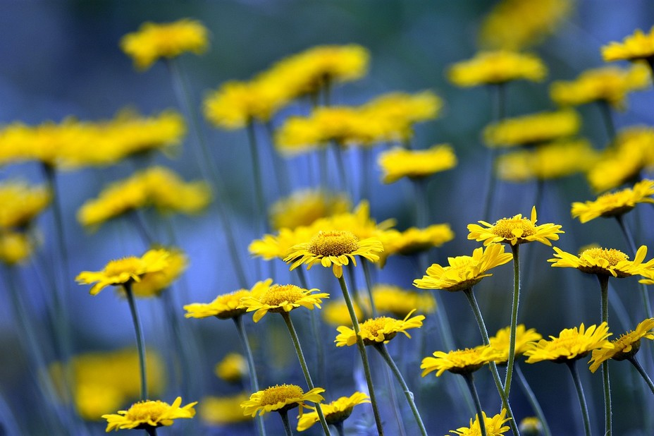 Tendances printemps, été, pour préparer les beaux jours. @ Arthur Pawlak/Lindigomag
