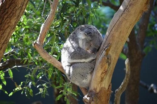 Zoo de Taronga, Sydney - Une nuit en immersion totale dans le monde animal. @ DR