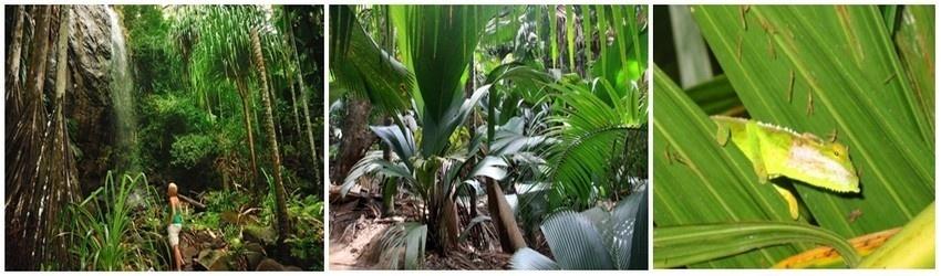 Située à 45 km au nord de Mahé, Praslin offre à ses visiteurs une nature sauvage et préservée à l'image de sa fameuse réserve naturelle de la Vallée de Mai classée depuis 1983 au Patrimoine mondial de l'Unesco. (Photos David Raynal)