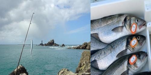 De gauche à droite : Technique de pêche avec leurre ; Les bars de lignes sont bagués pour assurer leur traçabilité (photos DR)