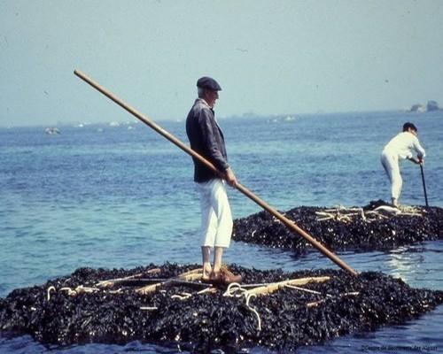 Une récolte traditionnelle à marée haute (photo DR)