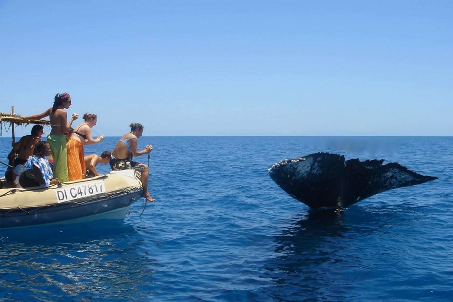 A Mayotte les sites de plongée sont principalement situés dans les passes, ces couloirs naturels bordés par le corail qui permettent aux navires de pénétrer et de sortir du lagon. Observer les poissons et mammifères marins (baleines, dauphins, requins, raies-manta) avec l'agence Mayotte-Découverte @ Mayotte-Découverte.