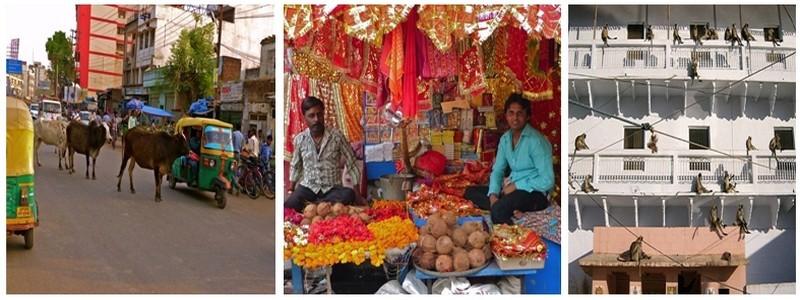 de gauche à droite 1 et 2 / Balade dans Bénarès ©Roger Jacquelin;  3/ le temple de Sankat Mochan, ou temple des singes (photo DR)