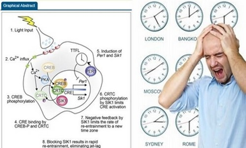 Schéma du mécanisme déclencheur de la fatigue du jet lag (photo DR)