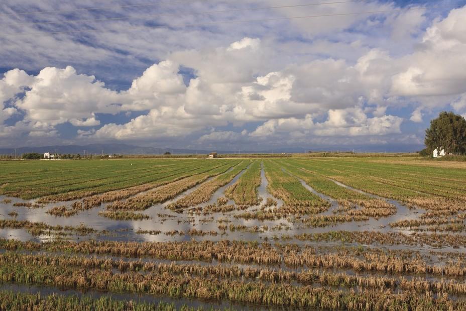 Delta de l'Ebre, des rizières à perte de vue @ Mariano Cebolla - ACT