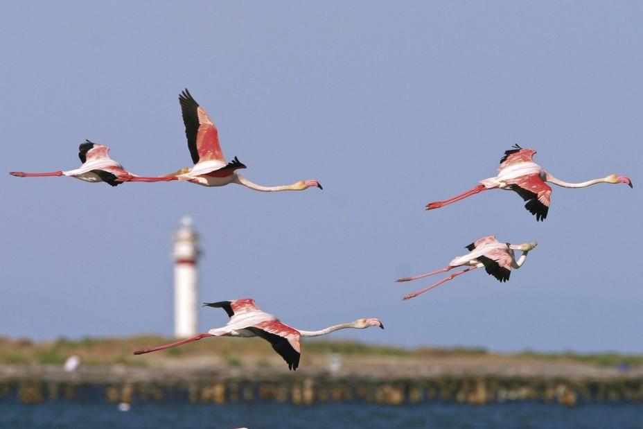 Une multitude d'oiseaux séjournent sans le delta, certains à l'année d'autres ne faisant que passer. Ici des flamants roses @ Mariano Cebolla