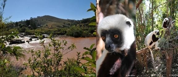 de Gauche à droite: Une vue de Madagascar; le Lémur Parc, un parc botanique où vivent différentes espèces de lémuriens  (Photos Yann Menguy)